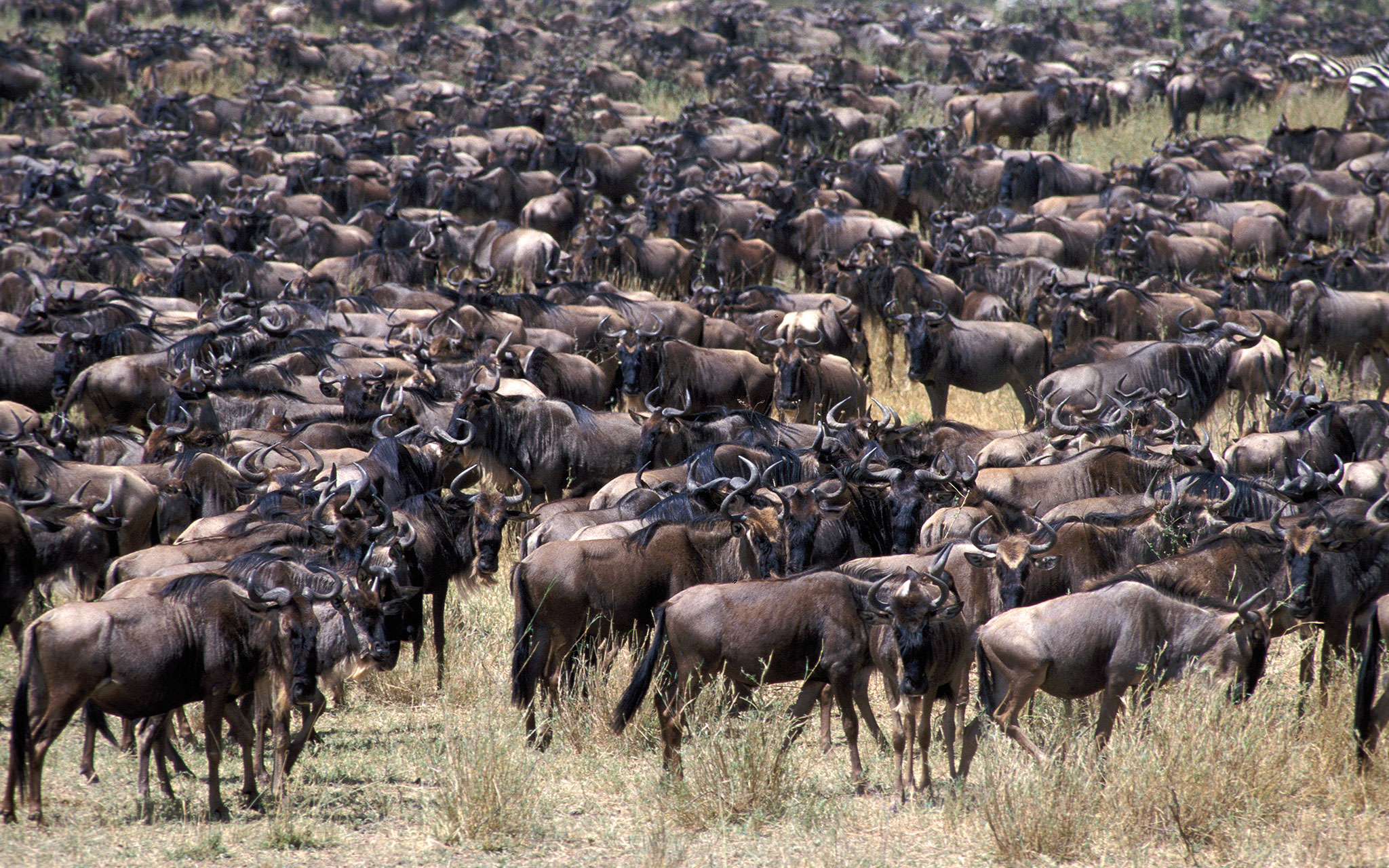 TANGANYIKA Expéditions - Safari Tanzanie