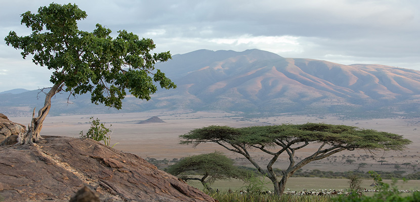 Le Serengeti emporte le titre d'Africa Leading National Park aux World Travel Awards